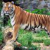 Kalakkad Mundanthurai Tiger Reserve (KMTR)