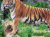 Mundanthurai Wildlife Sanctuary Tirunelveli