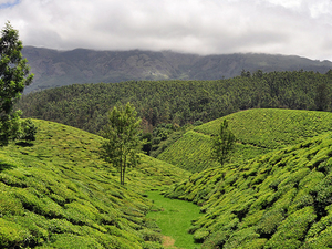 Munnar Honeymoon Package Photos
