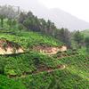 Kerala - Hills & Backwaters Holiday Package