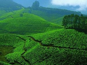 Diwali Kerala Tour Fotos