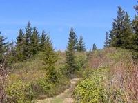 Maddron Bald Trail
