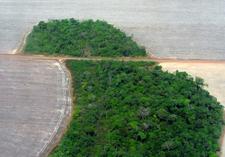 Deforestation In The Mato Grosso State Of Brazil