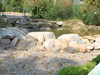 Matthaei  Botanical  Gardens  Stony  Stream
