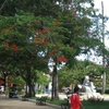 Melena Parque