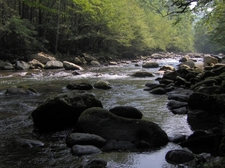 The Middle Fork Of The Little Pigeon River