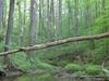 Possum Hollow And Snow Goose Trails