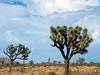 Mojave Desert Scene In Joshua Tree National Park