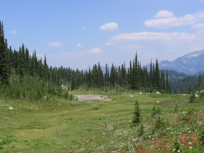 Meadow Near The Summit