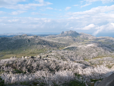Mt Buffalo Plateau