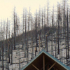 Picture Of Burnt Pine Trees, Snow And A Cabin