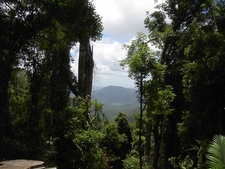 Mt Warning Path