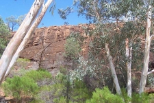 Mutawintji And River Red Gums