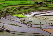 Nagacadan Rice Terraces