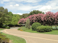 Nagai Botanical Garden - Osaka