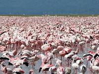 Lake Nakuru-Masai Mara-Mombasa Tour