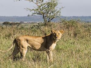Nairobi City Tour Fotos