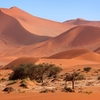 Namib Desert Red Sand Dunes