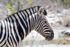 Namibia Botswana 3832
