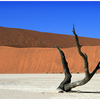 Namibia Deadvlei - Surrounded By Sand Dunes