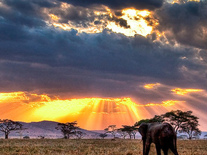 5 Days Tanzania Camping Safari Photos