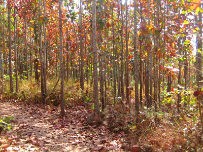 Nam Nao National Park