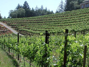 Napa Valley Wine capital da Índia