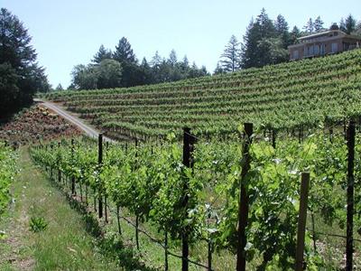 Napa Valley - Wine Capital Of India