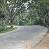 Narsapur Forest Road