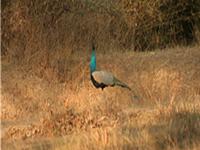 Narsinghgarh Santuario de Vida Silvestre