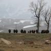 National Elk Refuge During Winter
