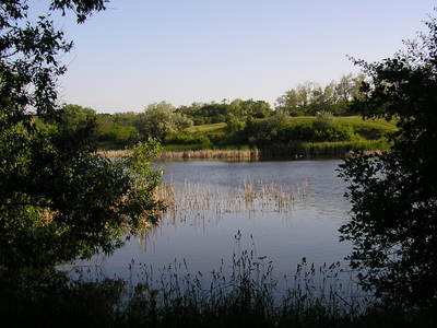 Nature Conservation Area Of Töreki, Siófok