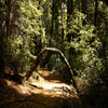 Nature Loop Trail