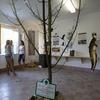 Naturaleza Exposición Preservar Room