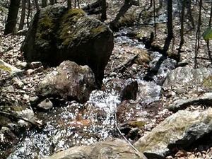 Naugatuck Forestal del Estado