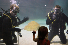 Navy Divers With A Guest