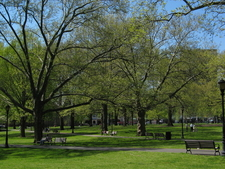 The Upper Green In Spring