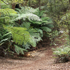 Ngamoko Track - Te Urewera National Park - New Zealand