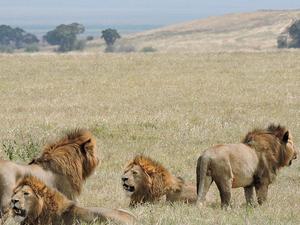 Serengeti Wildebeests Migration Safari Photos