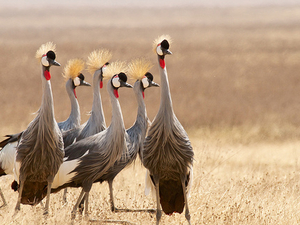 6 Days Ngorongoro Highlands Walking Tour Photos