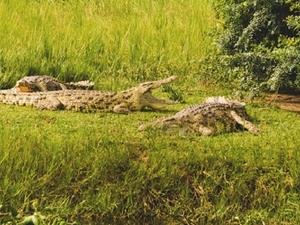 Wildlife Safari Tour To Western Uganda