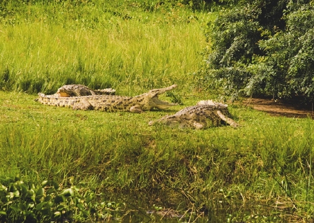 Wildlife Safari Tour To Western Uganda Photos