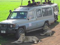 4 Day Safari in Northern Tanzania