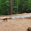 Tenedor del Norte Bridge Creek Trail
