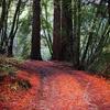 North Peak Trail 24 - Tonto National Forest - Arizona - USA