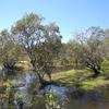 Australias Northern Territory - Crocs, Art Rock and Falls 6 días