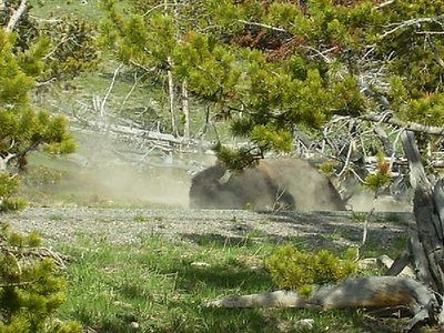 Now Dry Bath Lake - Yellowstone - USA