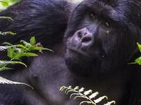 7 Days Gorilla And Wild Life Safari