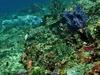 Nusa Penida Crystal-Bay