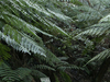 National Botanical Gardens Rainforest Tour